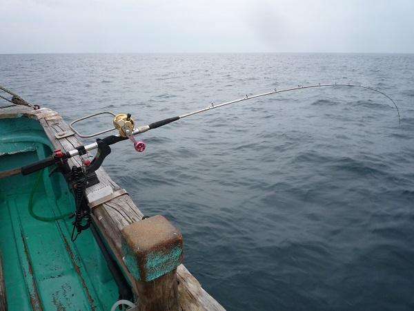 ヒラメ釣り開始